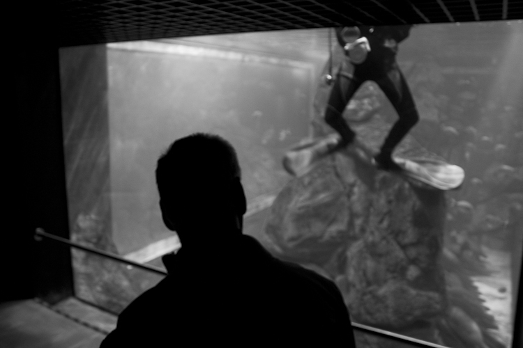 Hulk's Toys - A visit to the aquarium in Livorno.